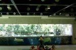 blick_auf_das_schildkroeten_aquarium_large_slimbox